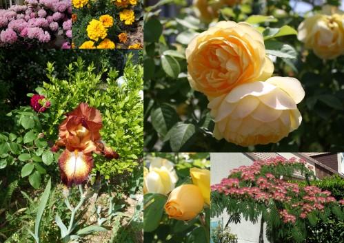Selection-roses.jpg